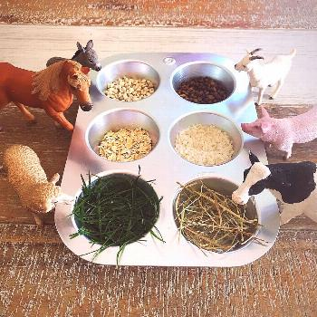 | Kaye loves visiting the Swiss farm near our house and feeding the farm animals, especially the co